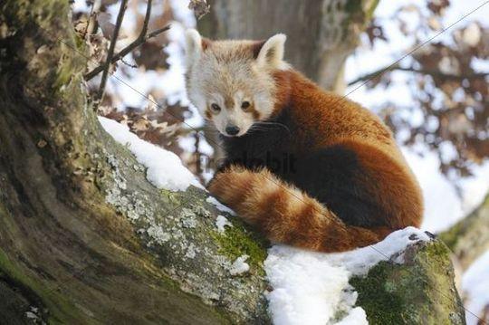 simeon panda ebook free download